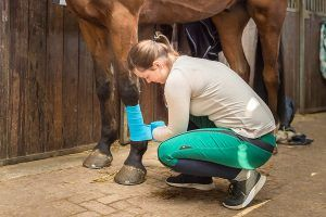 bandages paard