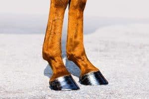 Beenstanden bij paarden