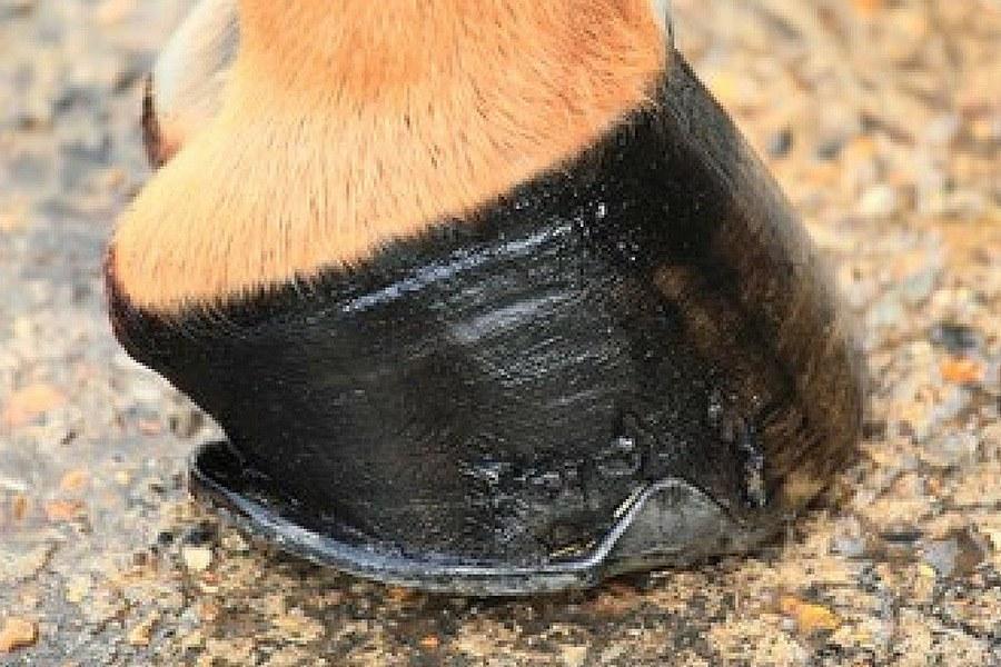 Biotine aan je paard geven