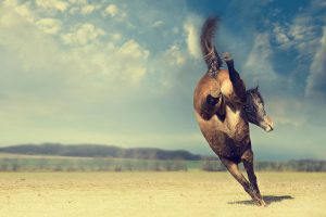 bokkend paard