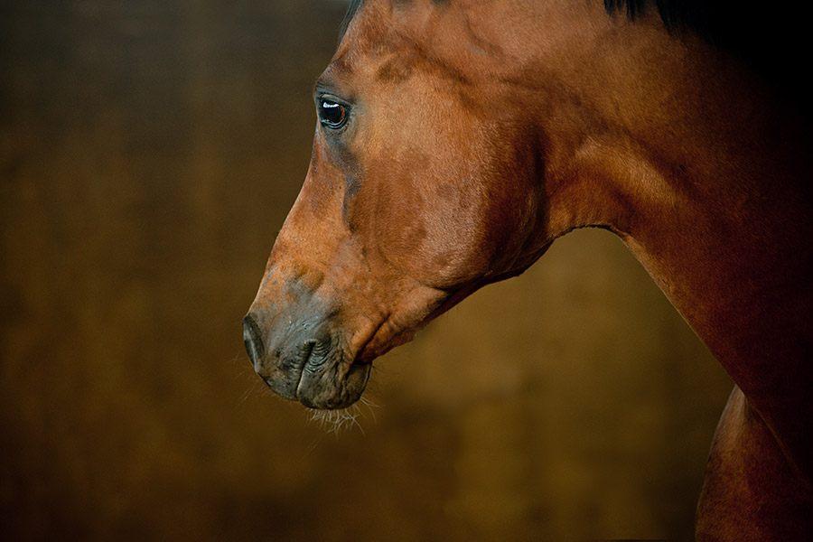 Cornage bij paarden