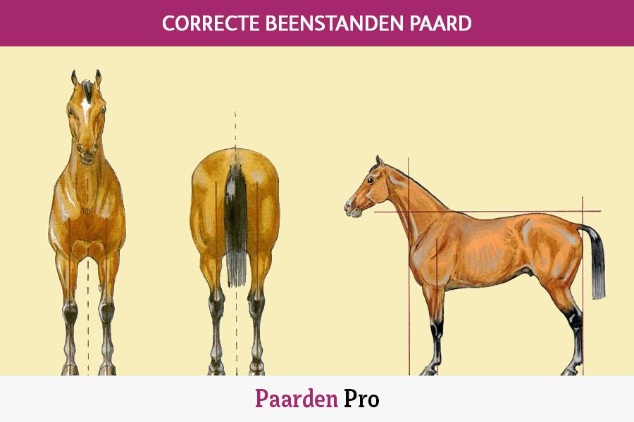 correcte beenstanden paard