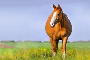 drachtig paard