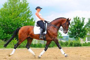 draf met je paard