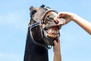 gezondheidscheck paard