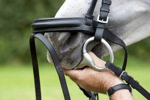 goed passend bit voor paard
