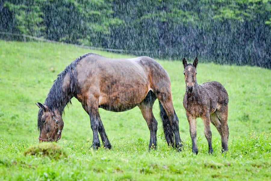 Huidschimmel bij paarden