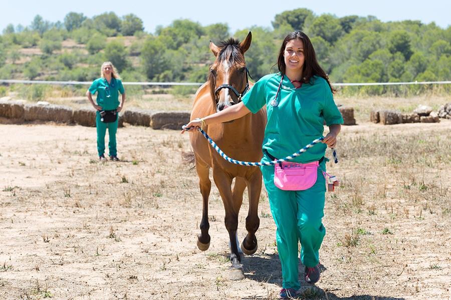 Kreupelheid bij paarden: is mijn paard kreupel?