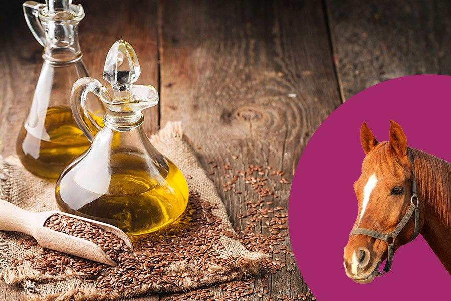 Lijnzaadolie voor paarden: waarom, hoeveelheid en werking