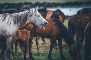 luchtwegaandoeningen bij het paard