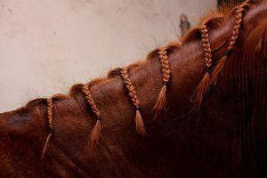 manen paard vlechten