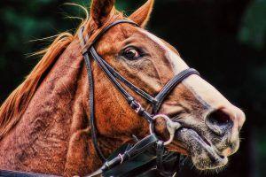 nerveus paard kalmeren