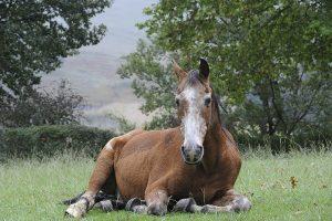 oud paard skipper