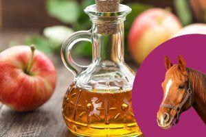 paard appelazijn geven