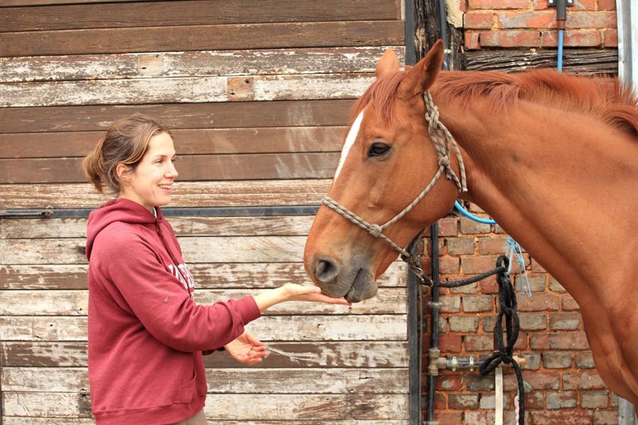 Je paard belonen: welk snoepje mag je aan je paard geven?