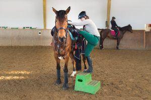 paard bestijgen