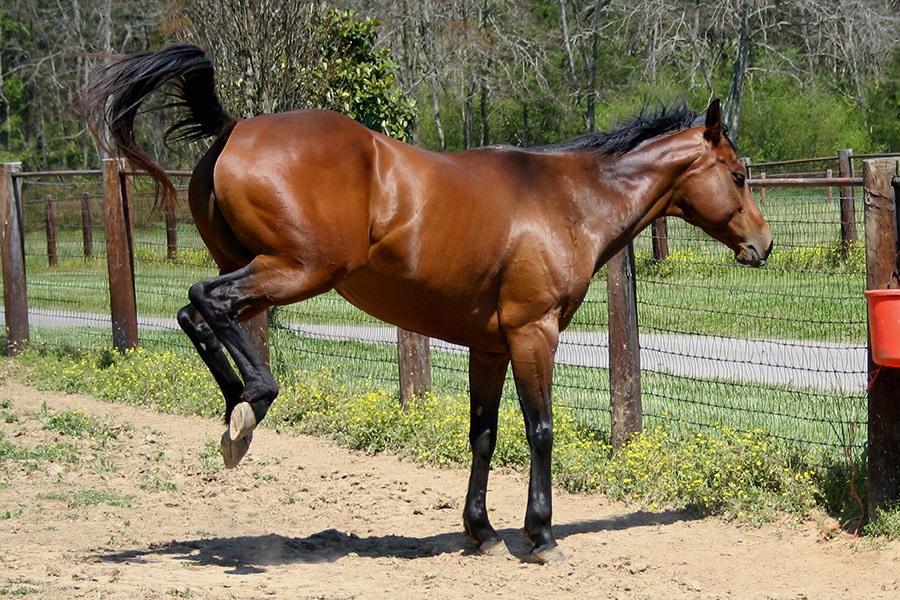 Waarom een paard bokt – bokken afleren