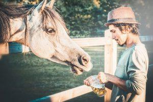 paard bruin bier geven