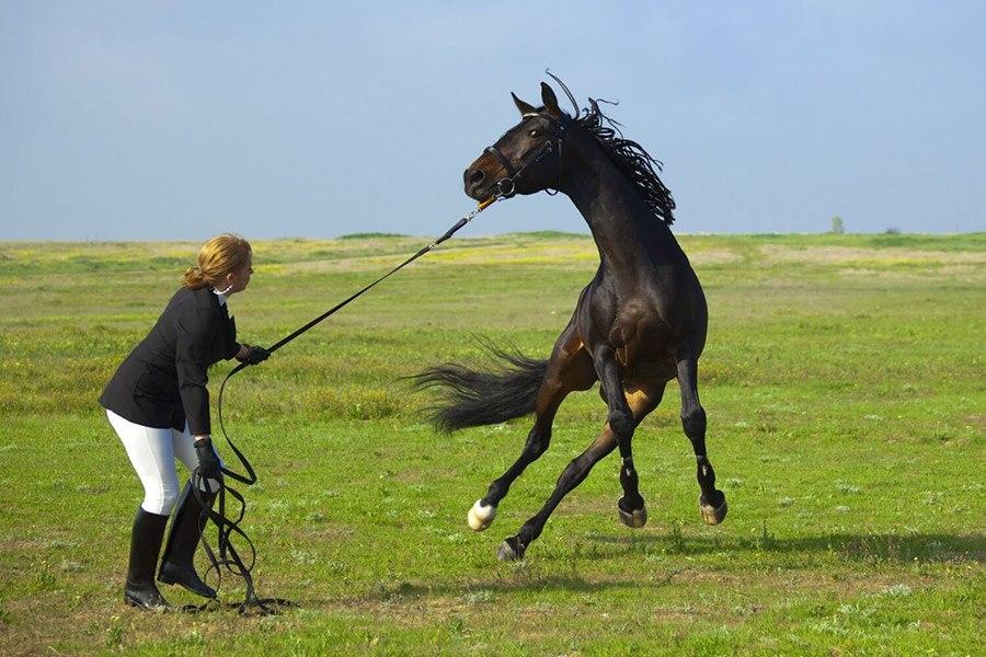 Een paard inrijden: hoe maak je een paard zadelmak?