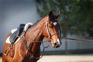 paard longeren leren