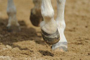paard maait met voorbenen