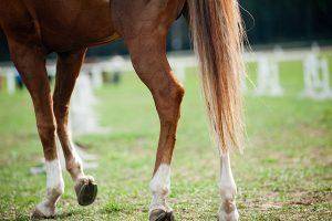 paard met artrose