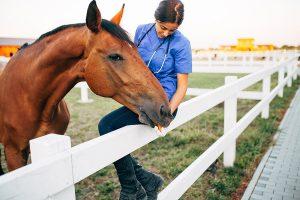 paard met diarree verzorgt door dierenarts