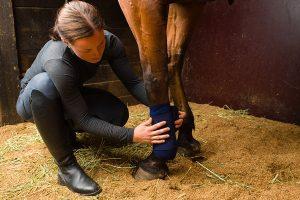 paard met dikke benen