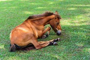paard met gebroken been