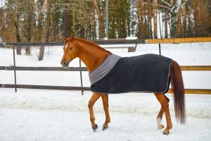 paard met paardendeken