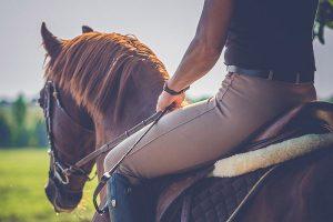 paard niet voorwaarts tijdens rijden