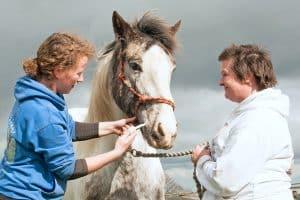 Paard ontwormen (inclusief ontwormschema)