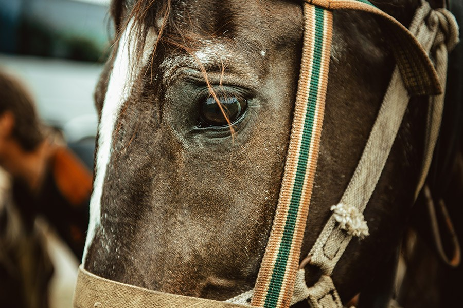 paard pijn