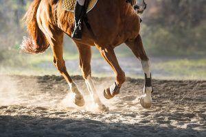 paard struikelt