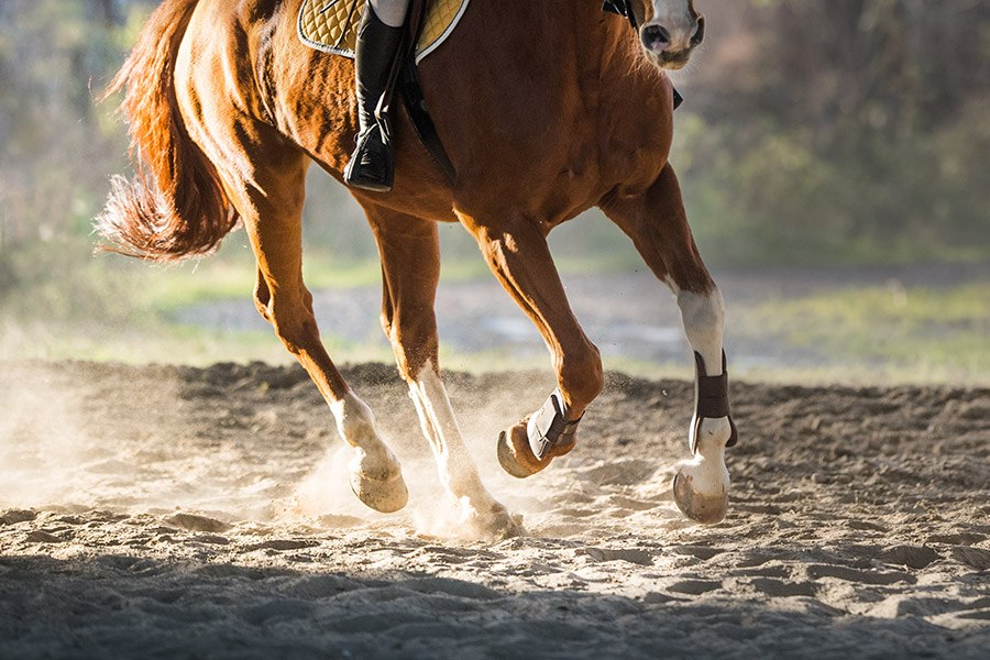 Mijn paard struikelt