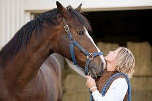 paard verzekeren
