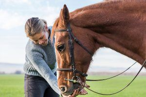 paard verzorgen
