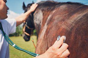 Is mijn paard ziek? Herken de symptomen!