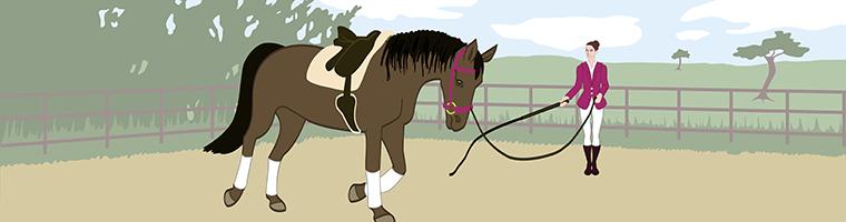 paardengedrag en training