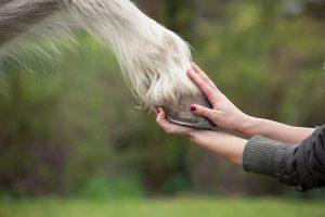 paardenhoeven verzorgen