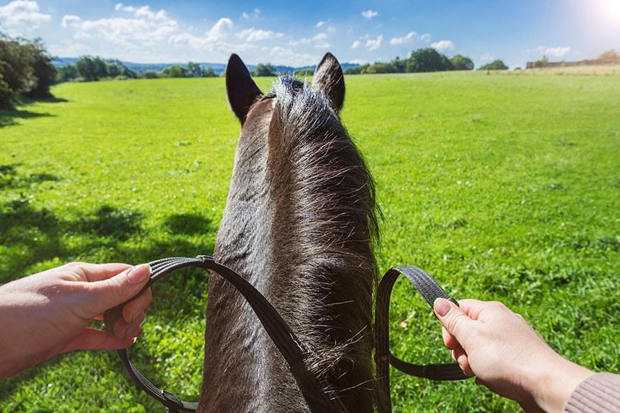 Paardrijden – Hoe rijd je een paard?
