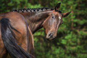 rugproblemen paard