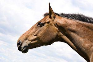 slokdarmverstopping bij het paard
