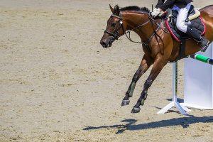 springen met je paard