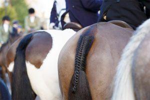 staart paard invlechten