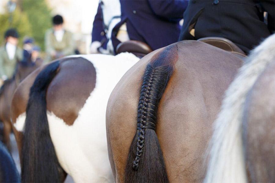 Staart van een paard invlechten