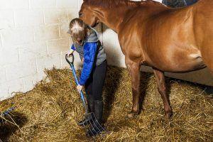 stal uitmesten paard