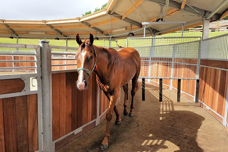 Je paard in de stapmolen