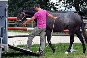 Je paard veilig in en uit de trailer laden