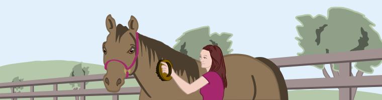 verzorging paard